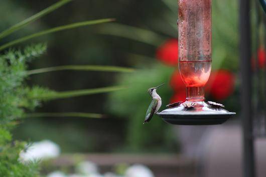 Submitted by: hummingbird