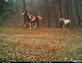 Wild Horses. Taken Nov. 13, 2014 Dubuque by Lester Lenstra.