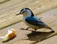 White breasted nuthatch finds some bread crumbs. Taken May 14, 2016 Backyard deck, Dubuque by Deanna Tomkins.