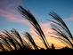Zebra grass in the early morning sun. Taken October 17, 2018 Dubuque  by Deanna Tomkins.