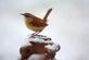 A wren on a snowy day. Taken in December in my yard in Dubuque by Lorlee Servin.