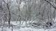 Frosted Woods. Taken January 2019 Dubuque Iowa by Laurie Helling.