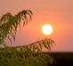 Sun sets over a Tiger Eye Sumac. Taken August 2015 Peosta, Iowa by Deanna Tomkins.