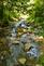 A small stream meanders.. Taken August 1, 2019 Swiss Valley nature center, Dubuque co., IA by Veronica McAvoy.