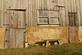 Two old gray barn doors, windows and a bench invite someone to sit.. Taken November 23, 2019 Asbury, Iowa by Veronica McAvoy.
