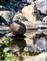 Duck dries off waiting for mallard. Taken April 22, 2017 Backyard pond by Deanna Tomkins.