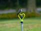 Eastern Phoebe   . Taken 9-2-20   Dubuque area        by Peggy Driscoll       .