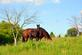 A mare and her two day old foal graze in the pasture. Taken in June in Dubuque by Lorlee Servin.