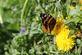 Butterfly. Taken May 2,2016 Heritage Trail by Veronica McAvoy.