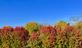 Fall colors spread across the landscape. Taken October 14 In Dubuque by Lorlee Servin.