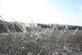 Frozen trees and fields. Taken Olde Davenport Road Olde Davenport Road by Thomas Lippstock.
