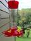Hummingbird landing for food on the first day of fall. Taken September 22, 2016 in Dubuque, IA by Jesse Drolema .
