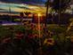 Good morning, sunshine. Taken 9/24/19 From my basement window by Stephanie Beck.