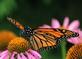 Fluttering By. Taken September 2021 Guttenberg, Ia by Laurie Helling.