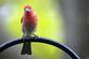 A finch sits in the rain.. Taken April In Dubuque by Lorlee Servin.