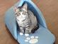 Kricut thinks it is slipper time!. Taken 10/15 home by Sandy.