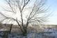 Frozen fields and trees. Taken 02/25/2017 Olde Davenport Road by Thomas Lippstock.
