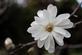 Simple Beauty. Taken April 2017 Dubuque Arboretum  by Laurie Helling.