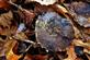 Fall leaves meet ice and snow.. Taken January 4, 2020 Mines of Spain, Dubuque, IA by Veronica McAvoy.