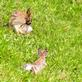 Literally too pooped to pop&#59; rabbits take a break . Taken June 20, 2020 Backyard, Dubuque  by Deanna Tomkins.