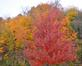 Color bursts from the trees. Taken Oct 27 in Dubuque by Lorlee Servin.