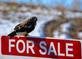 Hawk perches on a 'For Sale' sign. Taken January 7, 2017 John F. Kennedy Road, Dubuque  by Deanna Tomkins.