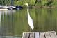 Is this what they mean by a long neck?. Taken September 11,2016 East Dubuque Marina by Veronica McAvoy.
