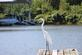 A egret stands on the dock to look for fish.. Taken September 11,2016 East Dubuque Marina by Veronica McAvoy.
