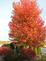 The colors of fall. Taken 10/19/14 in my neighbors yard by Stephanie Beck.