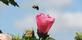 Bee-utiful day. Taken 8/29/14 in the garden by Stephanie Beck.