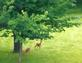 two deer. Taken 05/08/2014 Sisters of the Presentation Motherhouse by Sister Kay Cota, PBVM.