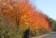 Fall trees line a driveway.. Taken October 16, 2017 North Cascade Road, Dubuque, IA by Veronica McAvoy.