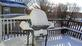 anyone ready for a winter barbecue?. Taken 1-19-19 backyard by Patti Menster.