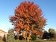 Beautiful Fall Colors. Taken Oct. 25, 2014 Bellevue by Lorraine Miller.