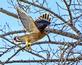 Hawk flies over bird feeding station. Taken January 8, 2018 Backyard, Dubuque by Deanna Tomkins.