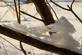 Funny delicate snow shapes on a branch.. Taken February 17, 2019 Mines of Spain, Dubuque, IA by Veronica McAvoy.