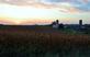 Horizon barn sunset. Taken October 8,2021 Dubuque, Iowa by Veronica McAvoy.