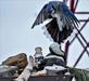 Bluejay landing on bird feeder. Taken January 18, 2019 Dubuque by Deanna Tomkins.