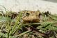 Friendly toad. Taken taken on Mother's Day as we were working in the garden. by Isabel Gile.