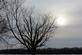 Tree along the Mississippi River. Taken Jan 2017 Cassville, WI by Linda Goodman.