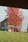 Fall Contrast. Taken October 19, 2014 Wisconsin Backroads by Victoria Vivian.