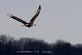 Bald Eagle. Taken January 23, 2015 Lock & Dam by Gary Hillard .