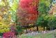 Painted Ladies. Taken October 16, 2014 Dubuque Arboretum by Laurie Helling.