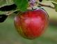 Apple for the Teacher. Taken August 13th, 2014 Near Holy Cross, Ia by Laurie Helling.