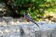A robin rests on a large boulder at a park.. Taken June 11, 2018 A. Y. McDonald park, Dubuque, IA by Veronica McAvoy.