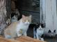 Kitty Kitty finally gets her kittens to come out in public. Taken this week at the farm by Dawn Pregler.