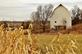 Rustic white barn by a cornfield.. Taken November 23, 2019 Asbury road, Dubuque, IA by Veronica McAvoy.