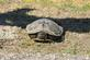 A painted turtle rests along a roadside.. Taken June 5, 2017 Near the Mississippi river by Veronica McAvoy.