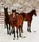 Snowtime horses.. Taken January 30. 2021 East Dubuque, ILL by Veronica McAvoy.