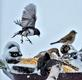 Juncos spar on bird feeder. Taken January 23, 2019 Dubuque by Deanna Tomkins.